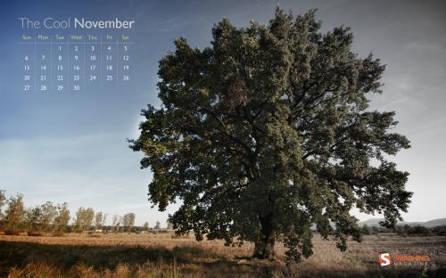 cool_november__85
