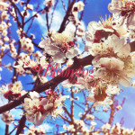 may-13-blooming_life-preview